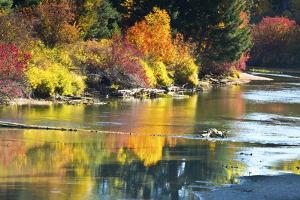 Fall foliage, White River Area, Wenatchee National Forest, WA. by Michel Hersen