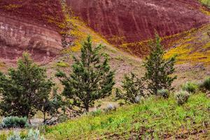 Painted Hills and golden bee plants. by Michel Hersen