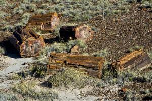 Petrified Forest National Park, Holbrook, Arizona, USA by Michel Hersen