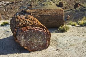 Petrified logs, Petrified Forest National Park, Holbrook, Arizona, USA by Michel Hersen