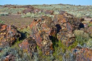 Petrified logs, Petrified Forest National Park, Holbrook, Arizona, USA. by Michel Hersen
