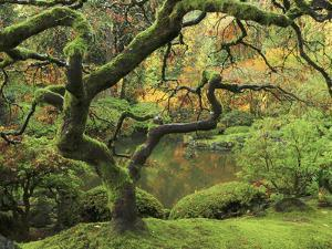 Portland Japanese Garden in Early Autumn: Portland Japanese Garden, Portland, Oregon, USA by Michel Hersen