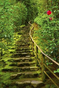 Stairs in Wild Garden, Portland Japanese Garden, Portland, Oregon, Usa by Michel Hersen