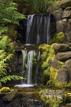 Waterfall, Crystal Springs Rhododendron Garden, Portland, Oregon, USA by Michel Hersen