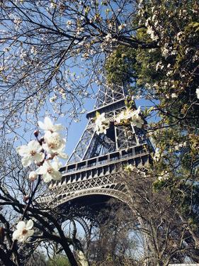 Eiffel Tower by Michel Lipchitz