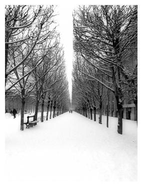 The Tuileries Garden under the snow, Paris by Michel Setboun
