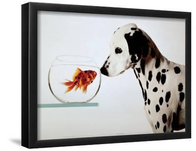 Dalmation Dog Looking at Dalmation Fish