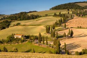 Monticchiello Winding Road with Cypress Trees by Michele Berti