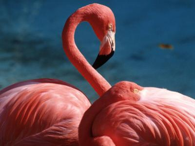 Pink Flamingos by Michele Burgess