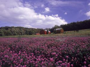 Purple Wildflowers in Field, Lancaster County, PA by Michele Burgess