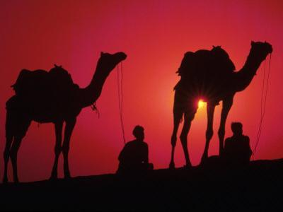 Silhouette of Men and Camels, India by Michele Burgess