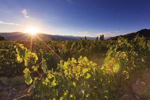 Argentina, Salta, Cafayate, Torrontes Grape Wineries by Michele Falzone