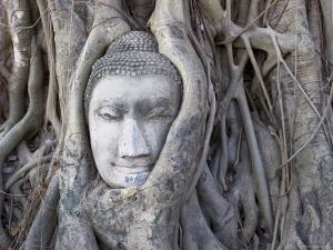 Buddha Head, Wat Phra Mahathat, Ayutthaya, Thailand by Michele Falzone