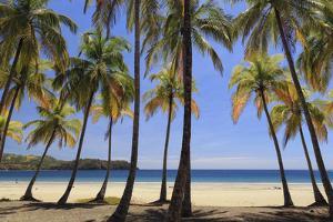 Costa Rica, Guanacaste, Nicoya Peninsula, Nosara, Playa Carillo by Michele Falzone