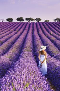 France, Provence Alps Cote d'Azur, Haute Provence, Plateau of Valensole, Lavander Fields by Michele Falzone