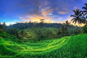 Indonesia, Bali, Ubud, Ceking Rice Terraces by Michele Falzone