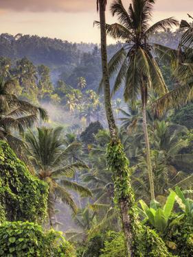 Indonesia, Bali, Ubud, Landscape Around the Campuhan Ridge Walk by Michele Falzone