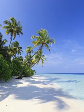 Maldives, Faafu Atoll, Filitheyo Island by Michele Falzone
