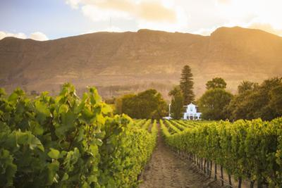 South Africa, Western Cape, Constantia, Buitenverwachting Wine Farm by Michele Falzone