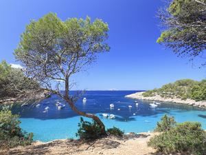 Spain, Balearic Islands, Ibiza, Cala Salada Beach by Michele Falzone