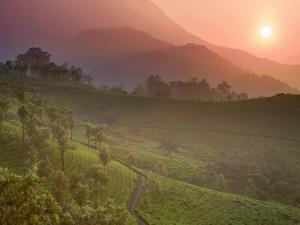 Tea Plantations, Munnar, Western Ghats, Kerala, India by Michele Falzone