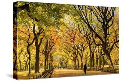 Usa, New York City, Manhattan, Central Park, the Mall by Michele Falzone