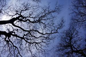 Argentina, Buenos Aires. looking up at the Spring sky in the Bosques de Palermo by Michele Molinari