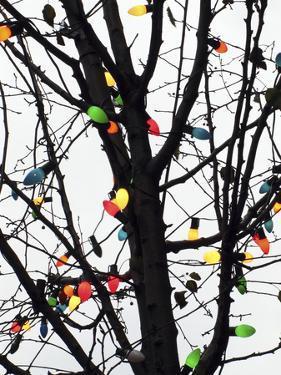 New York City, colorful Christmas lights by Michele Molinari