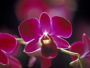Taman Orchid, Kuala Lumpur, Malaysia by Michele Molinari