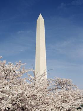 View of Washington Monument, Washington DC, USA by Michele Molinari
