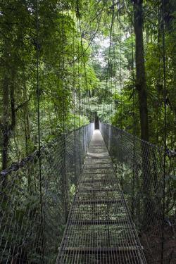 Mistico Arenal Hanging Bridges Park in Arenal, Costa Rica. by Michele Niles