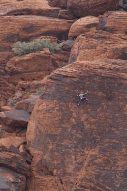 Rock climber at Red Rock Canyon, Las Vegas, Nevada. by Michele Niles
