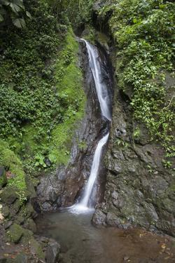 Waterfall in Mistico Hanging Bridges Park, Costa Rica. by Michele Niles
