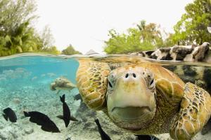 Face to Face with Green Sea Turtles by Michele Westmorland