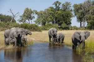 Family of African Elephants by Michele Westmorland