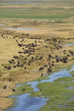 Okavango Delta Aerial by Michele Westmorland