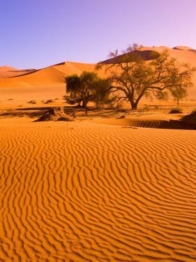 Sand Dune Landscape, Sossusvlei, Namibia World Heritage Site, Namib-Naukluft National Park, Namibia by Michele Westmorland