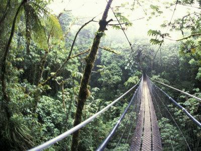 Sky Walk, Monteverde Cloud Forest, Costa Rica