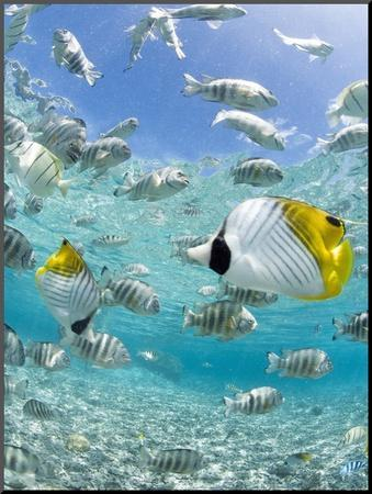 Tropical Fish in Bora-Bora Lagoon by Michele Westmorland