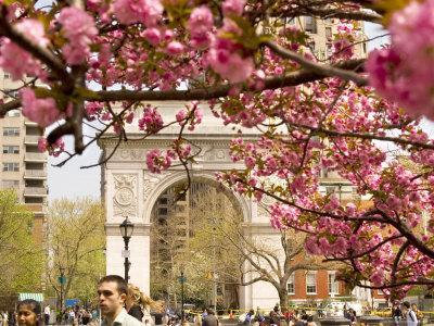 Washington Square Arch with Pink Blossoms in Foreground