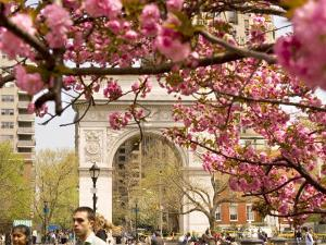 Washington Square Arch with Pink Blossoms in Foreground by Michelle Bennett