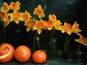 Arrangement of Daffodils and Oranges by Michelle Garrett
