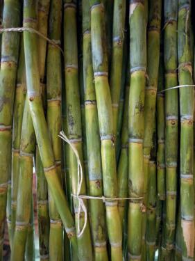 Close-Up of Bundles of Sugar Cane in Mexico, North America by Michelle Garrett