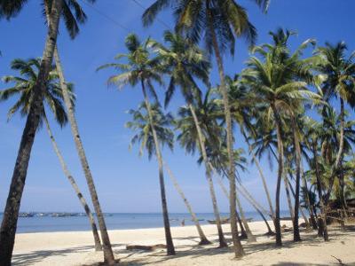 Palm Fringed Beach, Goa, India by Michelle Garrett