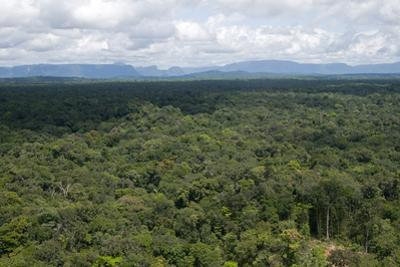 Aerial View over the Rainforest of Guyana, South America by Mick Baines & Maren Reichelt
