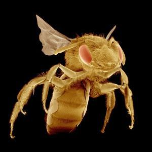 Bee by Micro Discovery