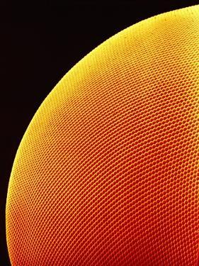 Compound Eye of a Flower Fly by Micro Discovery