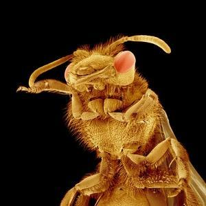 Front half of a Bee by Micro Discovery