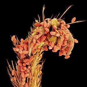Leg of a bee with pollen by Micro Discovery