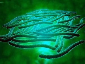 Microscopic View of Legionella Pneumophila